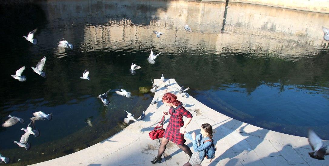 Envolée-de-pigeons-nimes-2